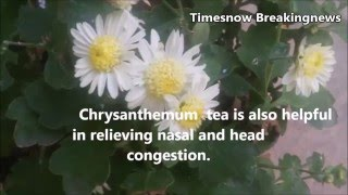 Health Benefits of Chrysanthemum