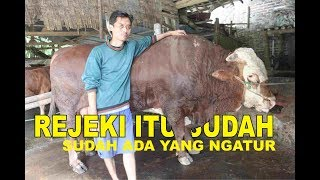 Video KANDANG SIMENTAL LIMOSIN MAGETAN MP3, 3GP, MP4, WEBM, AVI, FLV Agustus 2019
