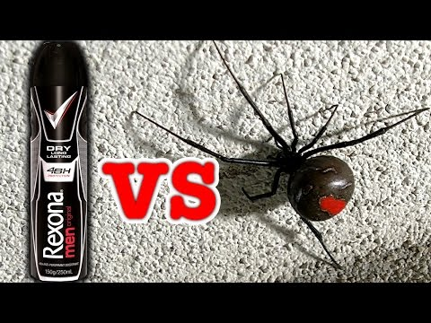 Big Scary Redback Spider Vs Rexona Deodorant (Viewer Request)
