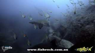 South West Rocks Australia  city photos gallery : Fish Rock Cave, Shark and Cave Dive, South West Rocks NSW Australia