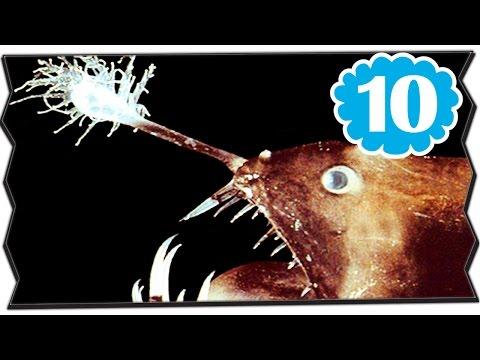 10 อันดับ สัตว์ประหลาด ใต้ทะเล ลึกสุดพิศดาร