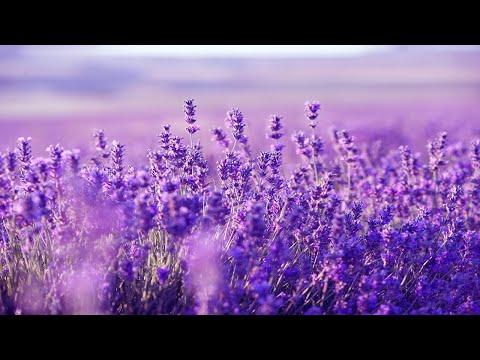 Relaxing Harp Music: Sleep Music, Stress Relief, Meditation Music, Spa Music, Background Music ★53