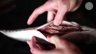 Jak filetować makrelę