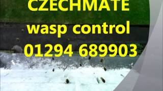 Pest Control Glasgow - Wasp Removal