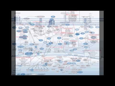 Bicalutamide Androgen Receptor Chemicals - Selleckchem
