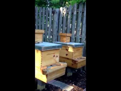Beekeeping for beginners 6