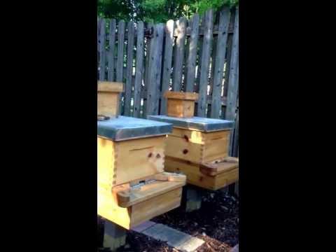 Beekeeping for beginners 6