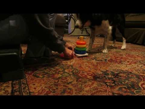Brilliant Dog Stacks Ring Toy
