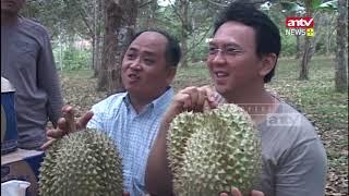 Video Ketika Ahok Bebas Makan & Promosikan Duren Milik Mualaf MP3, 3GP, MP4, WEBM, AVI, FLV April 2019