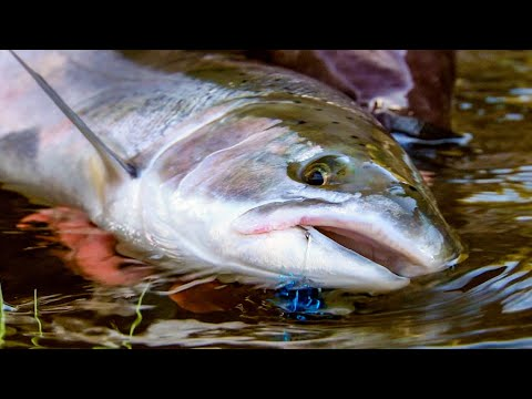 Spring Run By Todd Moen - Steelhead Fishing