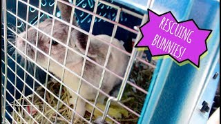RESCUING 3 BUNNIES FROM THE SHELTER