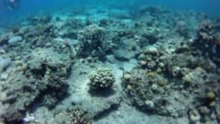 Download Lagu dive #2, Red Sea, Eilat, Israel Mp3