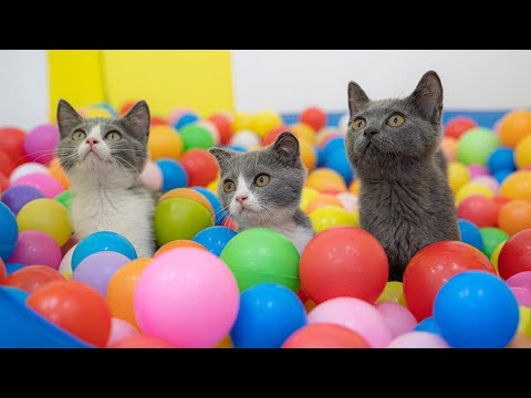 Three Cats and 1000 Balls in a Ball Pit !!