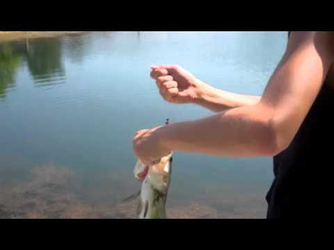 Pond fishing with yum: Baby crawbug