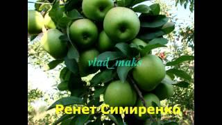 2. Сорта яблок