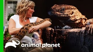 'The Snake Lady' Adds Her First Lizard To Her Collection | Scaled by Animal Planet