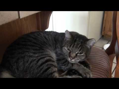 Cat Asthma Attack: Not a Hairball!