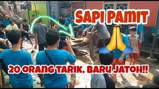 "Video SAPI PAMIT "" Detik - detik Si Montok diSembelih "" MP3, 3GP, MP4, WEBM, AVI, FLV Agustus 2019"
