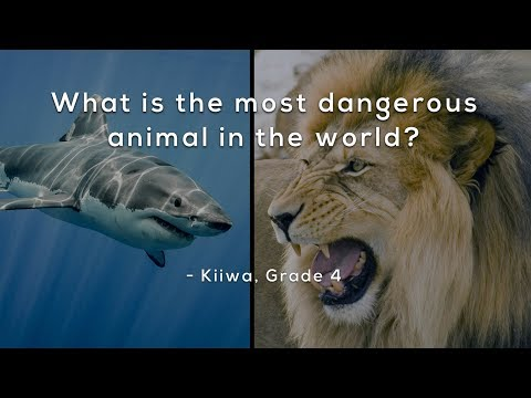 What is the most dangerous animal in the world?