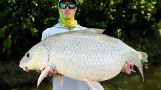 Video GIANT RIVER BUFFALO FISH!   Fishing Frogs for Bass Under Trees MP3, 3GP, MP4, WEBM, AVI, FLV Oktober 2018