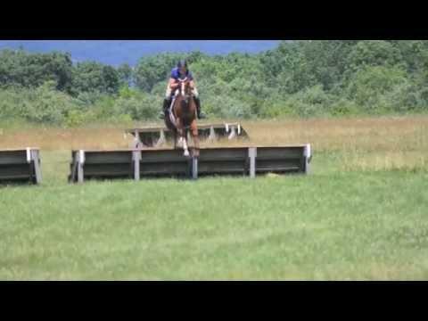 SOLD --- Hunter Jumper Show Horse for Sale PA NJ 2012