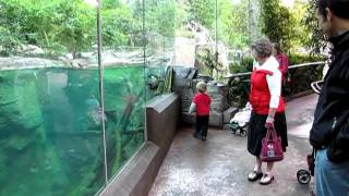 Kid Playing With An Otter - Too Cute!