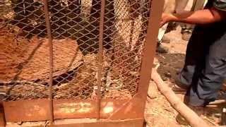 Video eksekusi penangkapan ular sanca raksasa di lahan kosong MP3, 3GP, MP4, WEBM, AVI, FLV Desember 2018