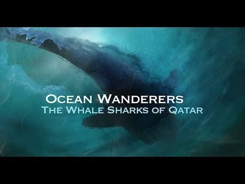 ocean - Towering underwater structures of the coast of Qatar are home to oilworkers above the waves. Beneath is a gathering place for giant fish, a wonder of the wor...
