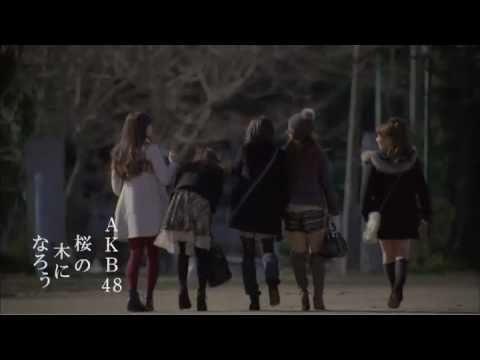 Tekst piosenki AKB48 - Sakura no ki ni narou po polsku
