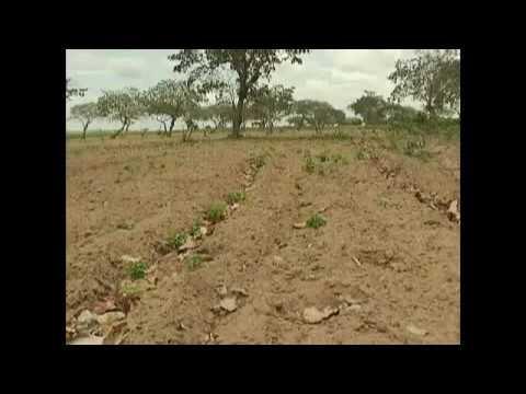 CNA realiza encontros para ouvir propostas de agricultores