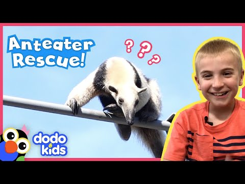 Rescue Team Saves Anteater Stuck High On Power Lines | Animal Videos For Kids | Dod… видео