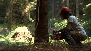 Nonton The Woodsman Film Subtitle Indonesia Streaming Movie Download