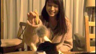 映画『旅猫リポート』メイキング