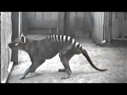 Rare Clips of Extinct Animals