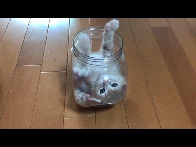 小さな器で毛繕いする子猫が超かわいい  A kitten relaxing in a small container