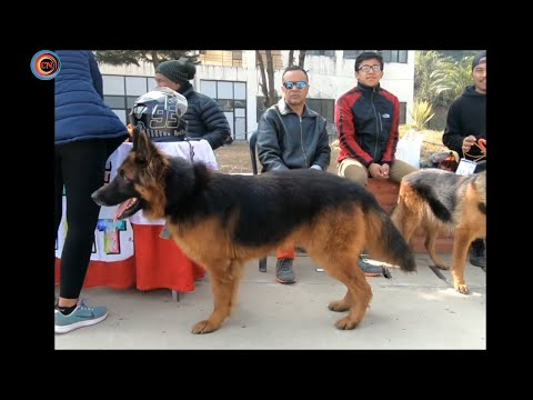 1st National  Dog Show In Nepal 2018 Feb 3