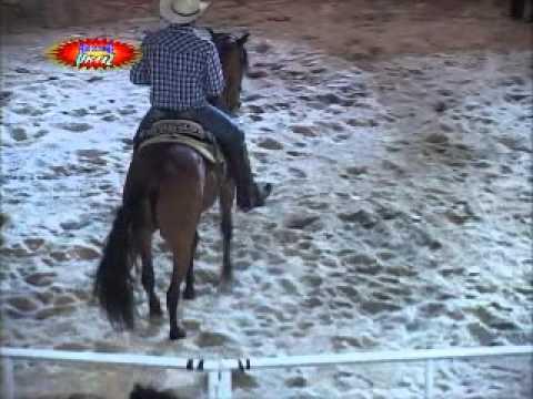 Jaripeo y Bronca: Rancho la Candelaria en Real de la Loma, Mor. (Con caballos educados)
