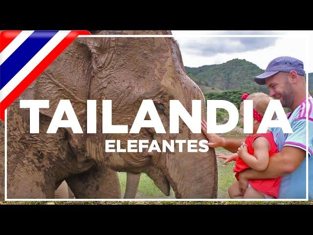 Maltrato Elefantes Tailandia y centro de recuperación.