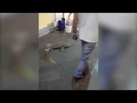 Man probeert levende haai te verkopen