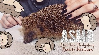 Video ASMR Français - Relaxation ~ Instagram + Whispering : Léon the Hedgehog / Léon le Hérisson MP3, 3GP, MP4, WEBM, AVI, FLV Juli 2017