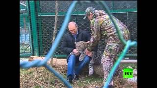 """بوتين يقود الـ""""نيفا"""" بنفسه ويزور مركز تربية الفهود في سوتشي"""