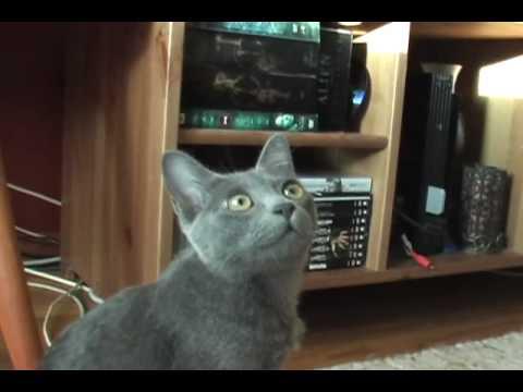 Ender 8, Korat Cat