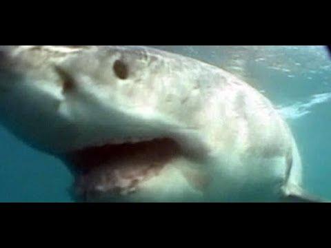 ELEKTRONIKMESSE: Dieser Hai ist eine Art Unterwasserd ...