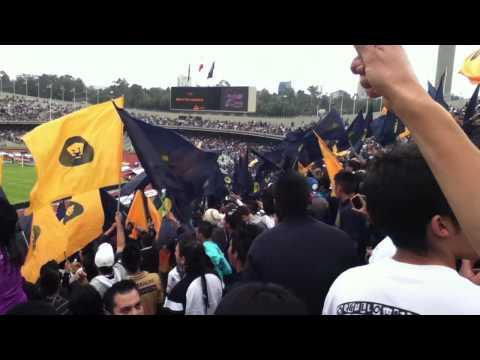 ReBEL.. CUANTO DARIA POR GRITAR PUMAS CAMPEON!! - La Rebel - Pumas