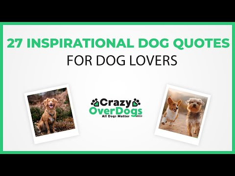 Family quotes - 27 Inspirational Dog Quotes For Dog Lovers To Bring A Smile