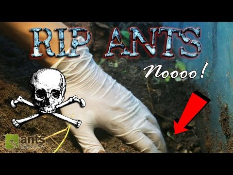 OH NO! ALL ANTS DEAD?!