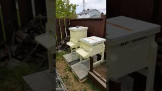 HONEY BEE VIDEO