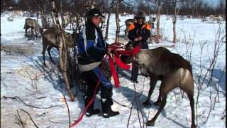 Kautokeino Norway  city pictures gallery : 07 01 SUAANGAN Dennis Allen goes to Kautokeino Norway to visit the SAMI pt2