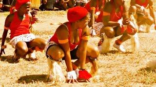 Download Lagu INDLAMU Kwazulu Natal Best Zulu Dance (Must Watch) Mp3