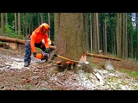 Perfect work with Stihl MS 462